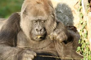 Układ pokarmowy i oddechowy ssaków